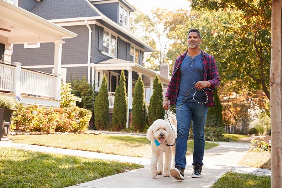 Services Run And Play Groupindividual Dog Walksboarding