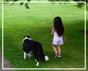 How to Prevent Dog Bites at Home - Run and Play