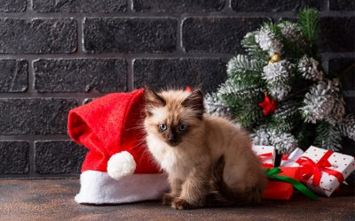 Spread The Cheer Over The Holidays With Your Pet