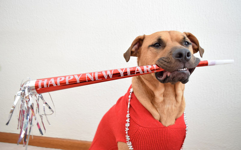 7 Resolutions Your Pets Want You to Make