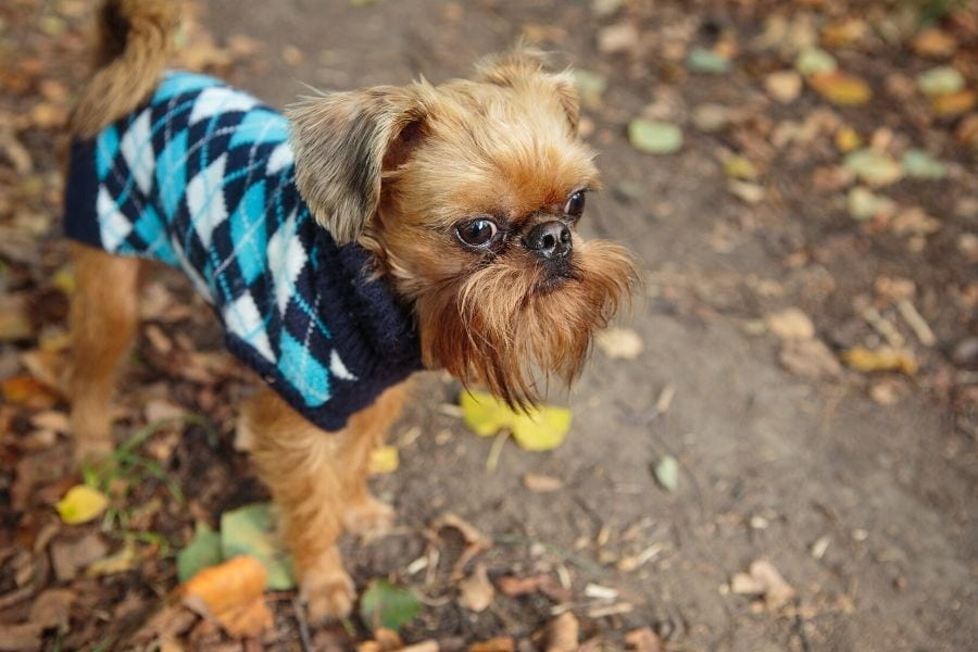 Does My Dog Need a Sweater?