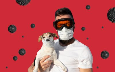 Coronavirus and Your Pet
